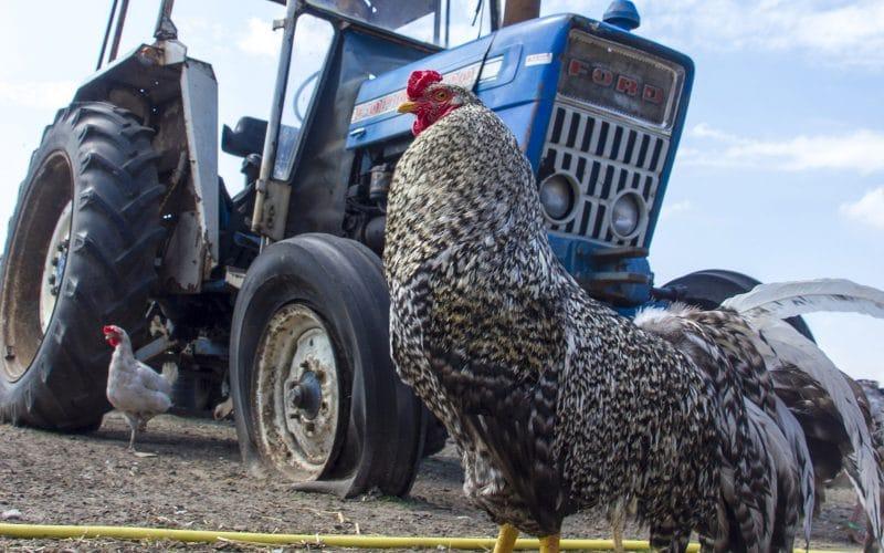 Tractor-behendigheidscursus